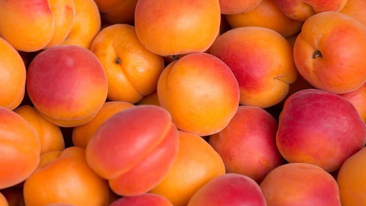 Abricots_hannut